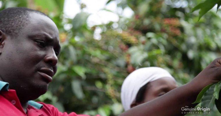 The Genuine Origin Coffee Project – Farmer Profitability: The Key to Sustainability